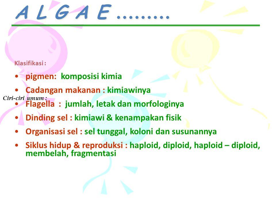 A L G A E ……… Ciri-ciri umum : Klasifikasi : pigmen: komposisi kimia Cadangan makanan : kimiawinya Flagella : jumlah, letak dan morfologinya Dinding s