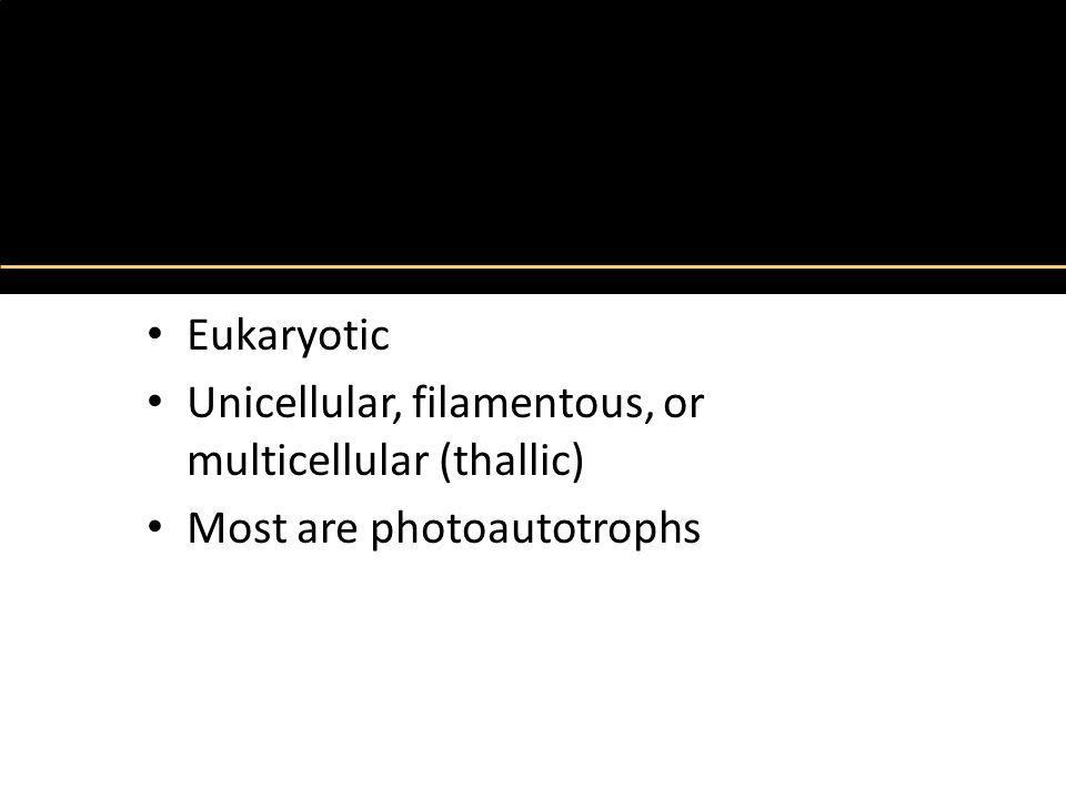 The Algae Eukaryotic Unicellular, filamentous, or multicellular (thallic) Most are photoautotrophs