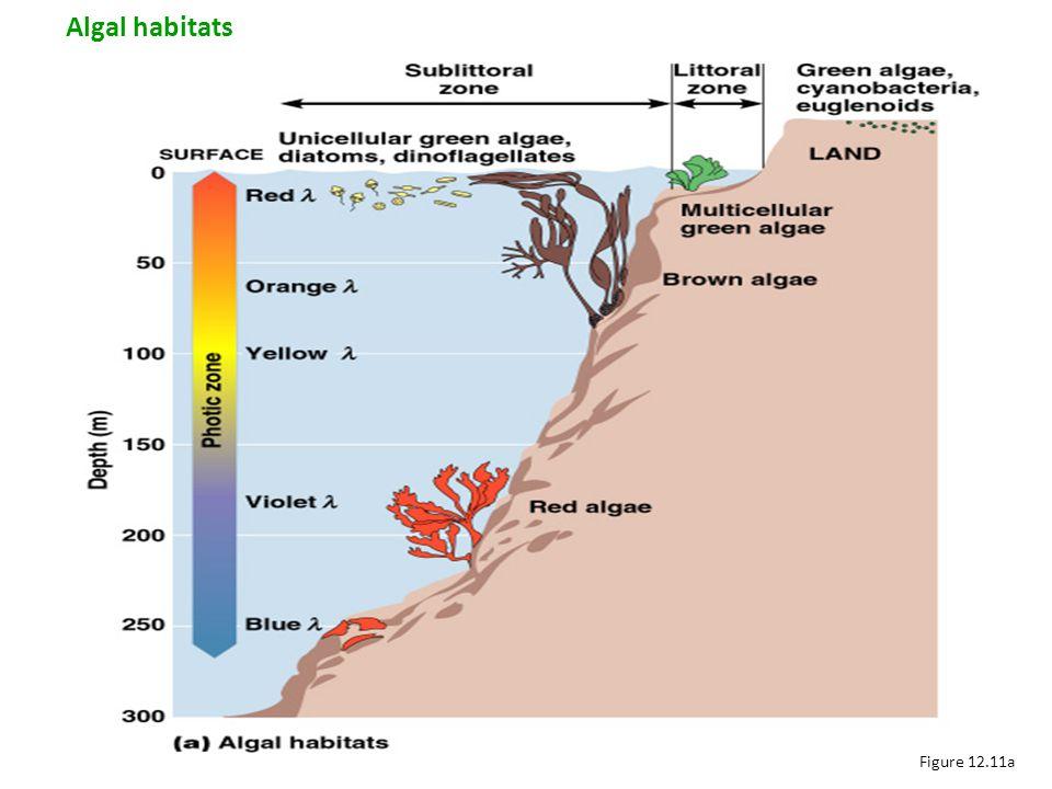 Figure 12.11a Algal habitats
