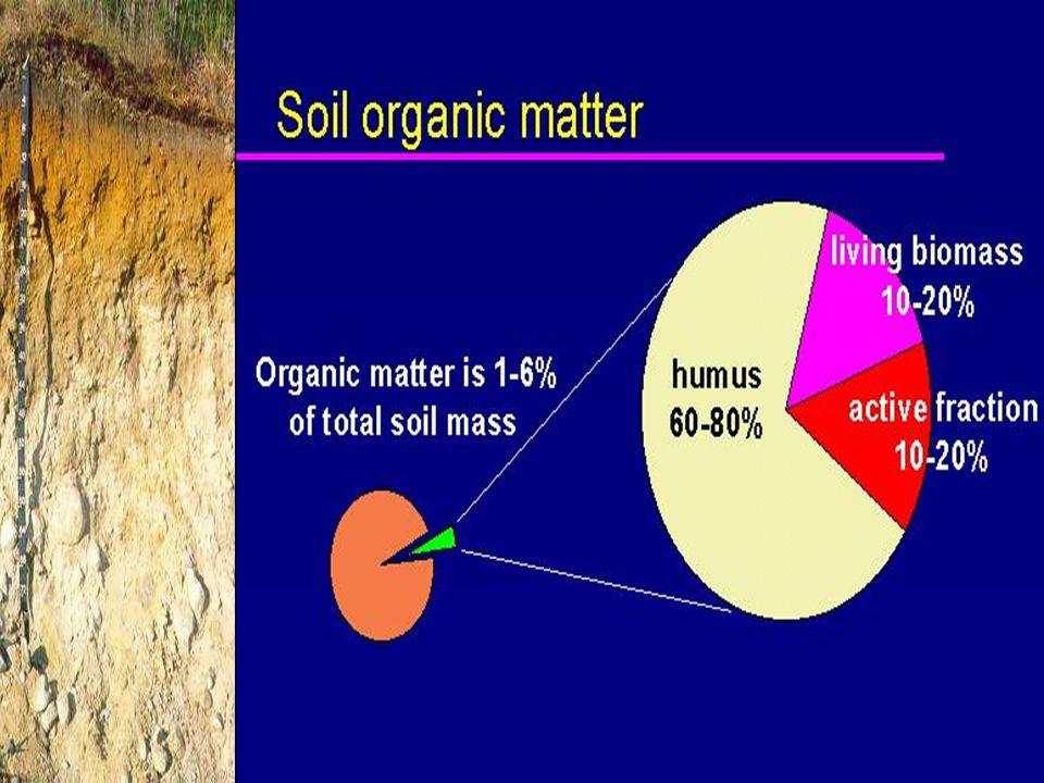 500 m The Rhizosphere and Soil Microorganism Root hairs Root Exudates Soil Microorganisms
