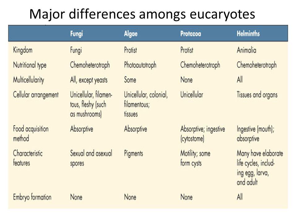 Major differences amongs eucaryotes