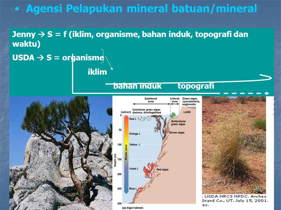 Agensi Pelapukan mineral batuan/mineral Jenny  S = f (iklim, organisme, bahan induk, topografi dan waktu) USDA  S = organisme iklim bahan induk topo
