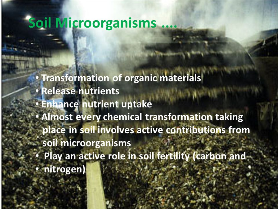 Red algae Cellulose cell walls Most multicellular Chlorophyll a and d, phycobiliproteins Store glucose polymer Harvested for agar and carrageenan Rhodophyta Figure 12.11c
