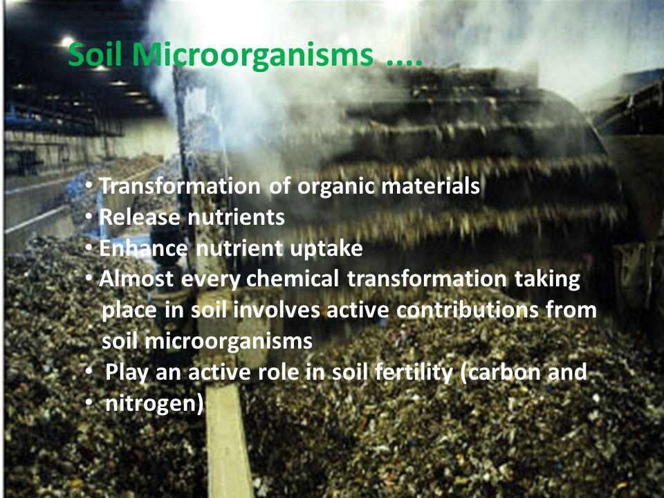 A L G A E ……… Ciri-ciri umum : Struktur sel : dinding sel : selulosa dan polisakarida lain (pektin, mannan).