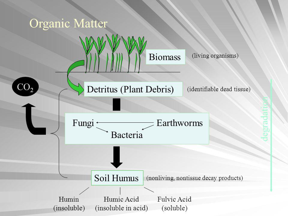 CO 2 Detritus (Plant Debris) FungiEarthworms Bacteria Soil Humus Organic Matter Biomass Humin (insoluble) Humic Acid (insoluble in acid) Fulvic Acid (