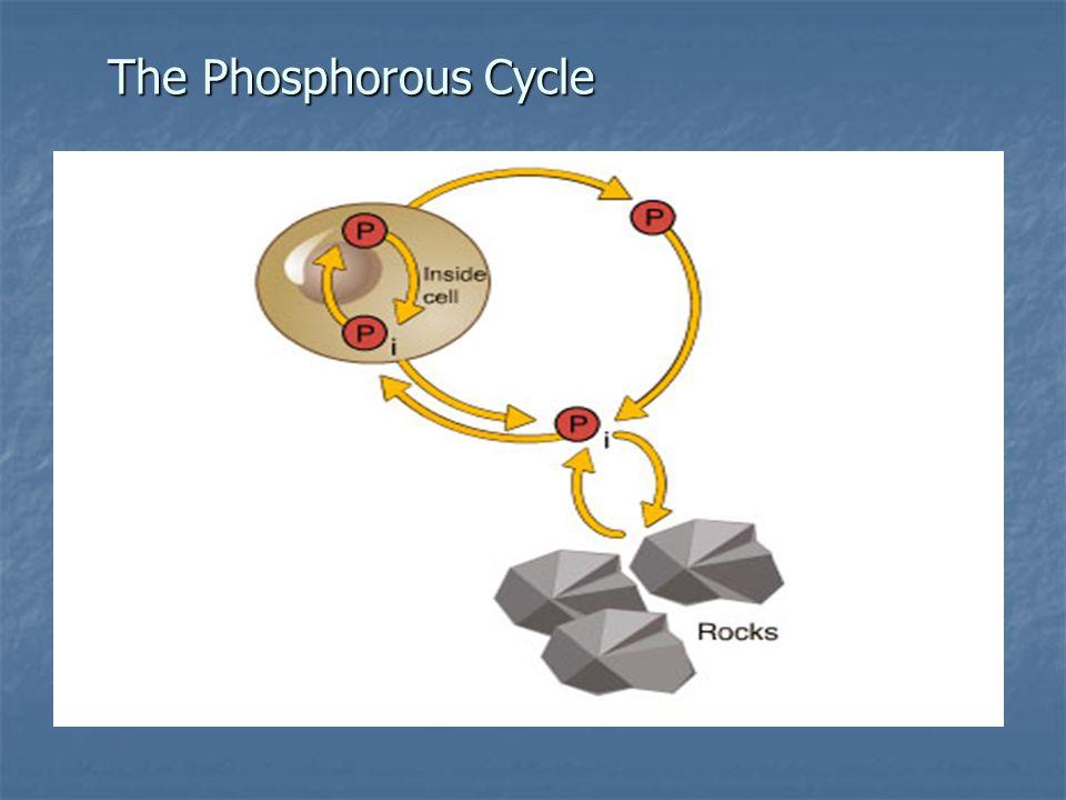 The Phosphorous Cycle
