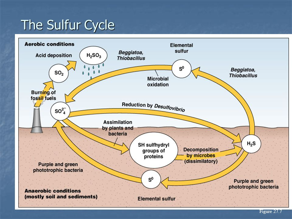 The Sulfur Cycle Figure 27.7