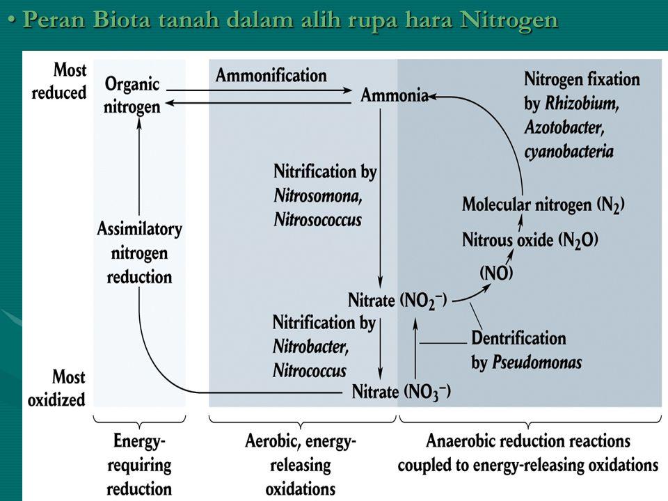 Peran Biota tanah dalam alih rupa hara Nitrogen Peran Biota tanah dalam alih rupa hara Nitrogen