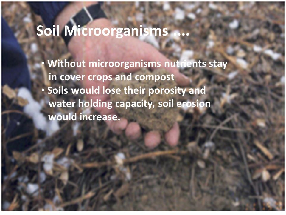 Without microorganisms nutrients stay in cover crops and compost Soils would lose their porosity and water holding capacity, soil erosion would increase.
