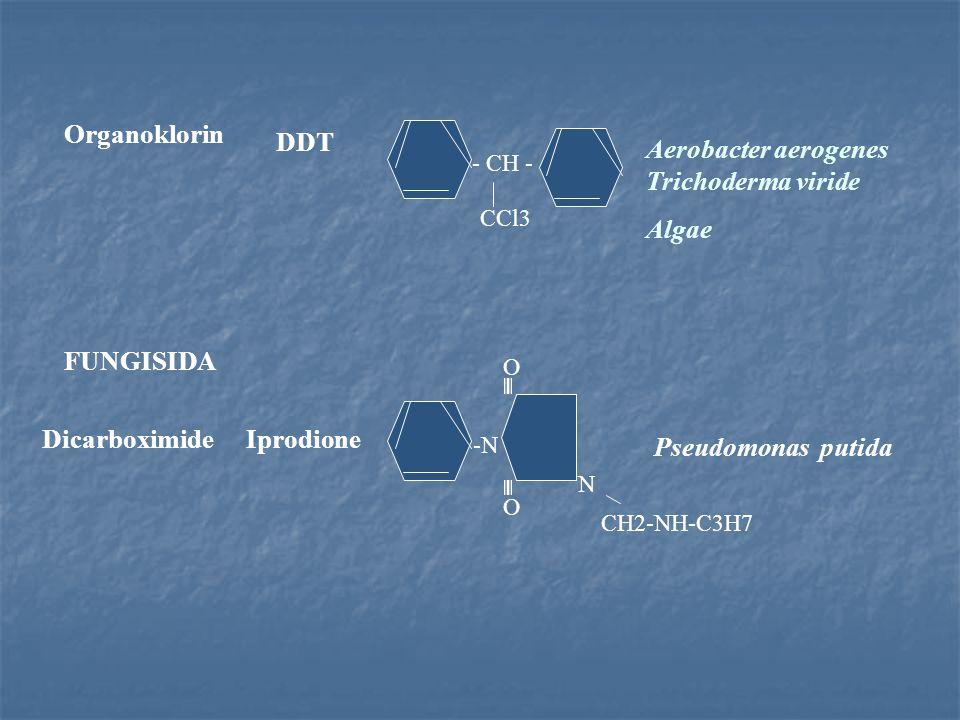 - CH - CCl3 Organoklorin DDT Aerobacter aerogenes Trichoderma viride Algae CH2-NH-C3H7 O -N O N FUNGISIDA DicarboximideIprodione Pseudomonas putida