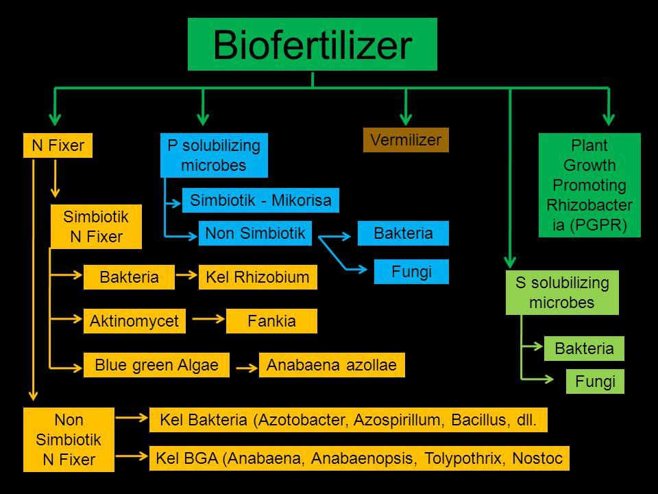 Biofertilizer N FixerP solubilizing microbes S solubilizing microbes Vermilizer Plant Growth Promoting Rhizobacter ia (PGPR) Simbiotik N Fixer Non Sim