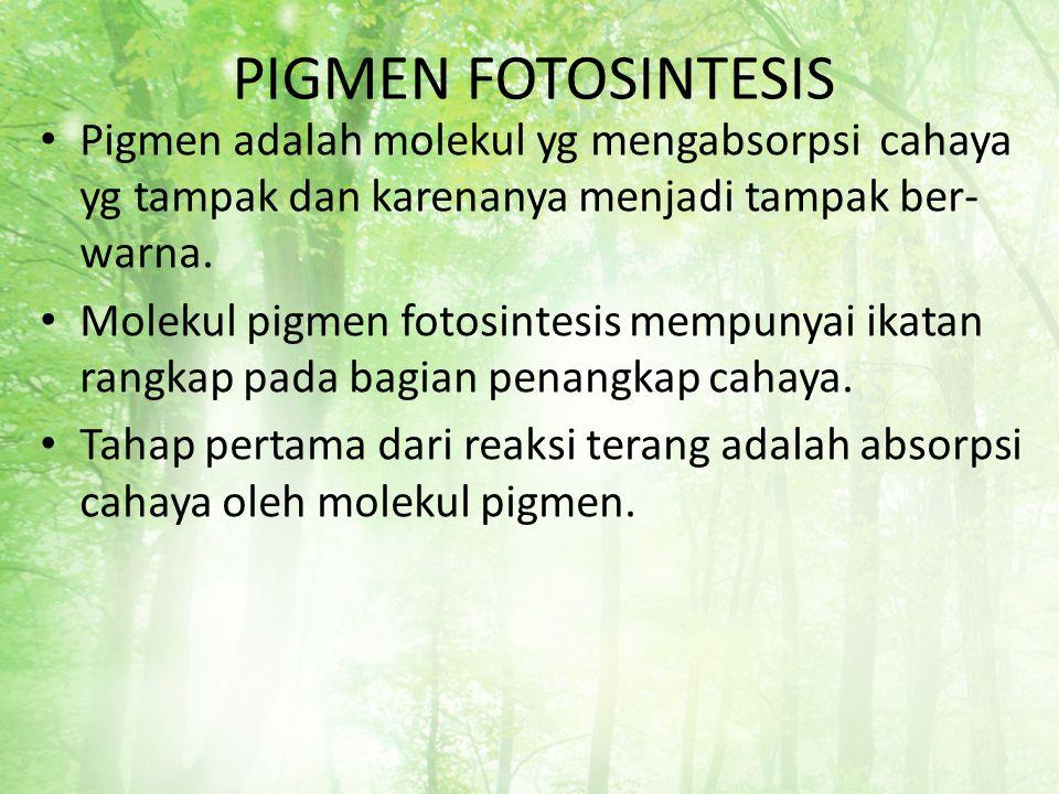 PIGMEN FOTOSINTESIS Pigmen adalah molekul yg mengabsorpsi cahaya yg tampak dan karenanya menjadi tampak ber- warna. Molekul pigmen fotosintesis mempun