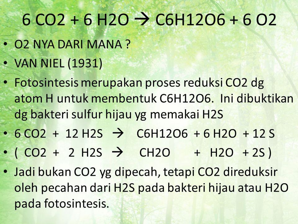 6 CO2 + 6 H2O  C6H12O6 + 6 O2 O2 NYA DARI MANA ? VAN NIEL (1931) Fotosintesis merupakan proses reduksi CO2 dg atom H untuk membentuk C6H12O6. Ini dib