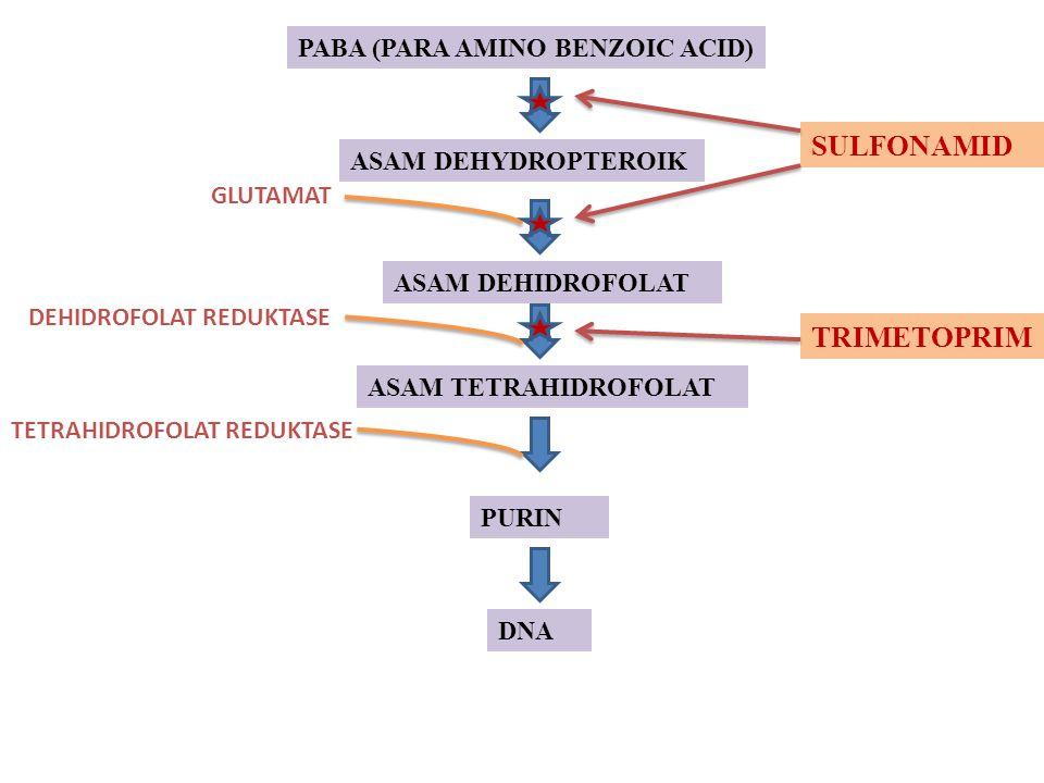 PABA (PARA AMINO BENZOIC ACID) ASAM DEHYDROPTEROIK ASAM DEHIDROFOLAT ASAM TETRAHIDROFOLAT PURIN DNA GLUTAMAT DEHIDROFOLAT REDUKTASE TETRAHIDROFOLAT RE