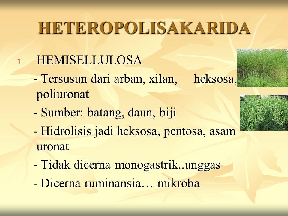 HETEROPOLISAKARIDA 1. HEMISELLULOSA - Tersusun dari arban, xilan, heksosa, poliuronat - Tersusun dari arban, xilan, heksosa, poliuronat - Sumber: bata