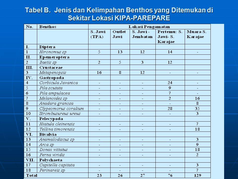 Tabel B. Jenis dan Kelimpahan Benthos yang Ditemukan di Sekitar Lokasi KIPA-PAREPARE