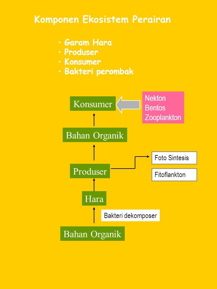 Komponen Ekosistem Perairan Garam Hara Produser Konsumer Bakteri perombak Konsumer Bahan Organik Produser Hara Bahan Organik Nekton Bentos Zooplankton