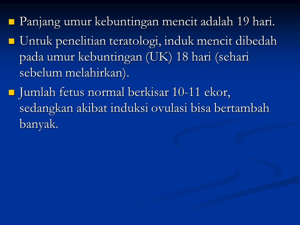 Panjang umur kebuntingan mencit adalah 19 hari. Panjang umur kebuntingan mencit adalah 19 hari. Untuk penelitian teratologi, induk mencit dibedah pada