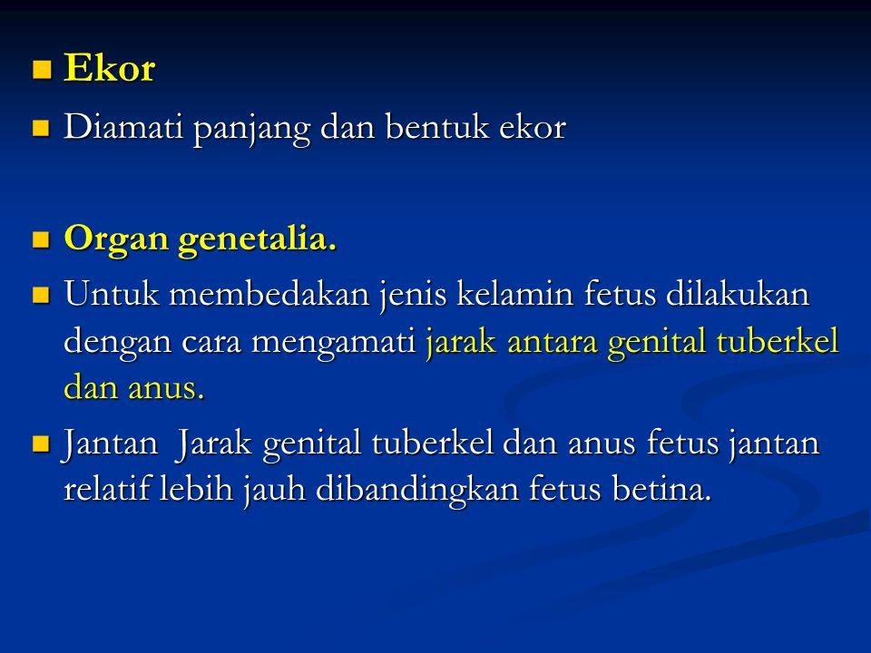 Ekor Ekor Diamati panjang dan bentuk ekor Diamati panjang dan bentuk ekor Organ genetalia. Organ genetalia. Untuk membedakan jenis kelamin fetus dilak