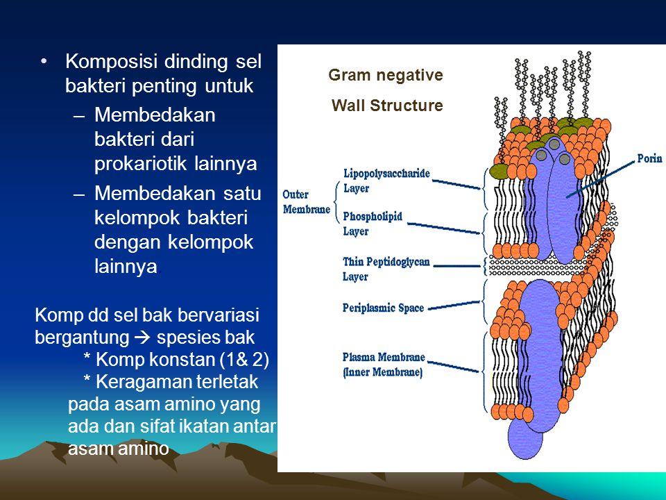 Gram negative Wall Structure Komposisi dinding sel bakteri penting untuk –Membedakan bakteri dari prokariotik lainnya –Membedakan satu kelompok bakter