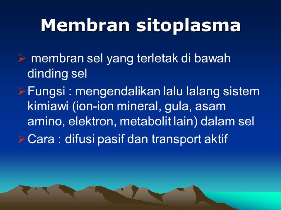 Membran sitoplasma  membran sel yang terletak di bawah dinding sel  Fungsi : mengendalikan lalu lalang sistem kimiawi (ion-ion mineral, gula, asam a