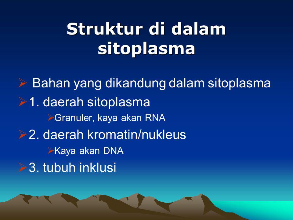 Struktur di dalam sitoplasma  Bahan yang dikandung dalam sitoplasma  1. daerah sitoplasma  Granuler, kaya akan RNA  2. daerah kromatin/nukleus  K