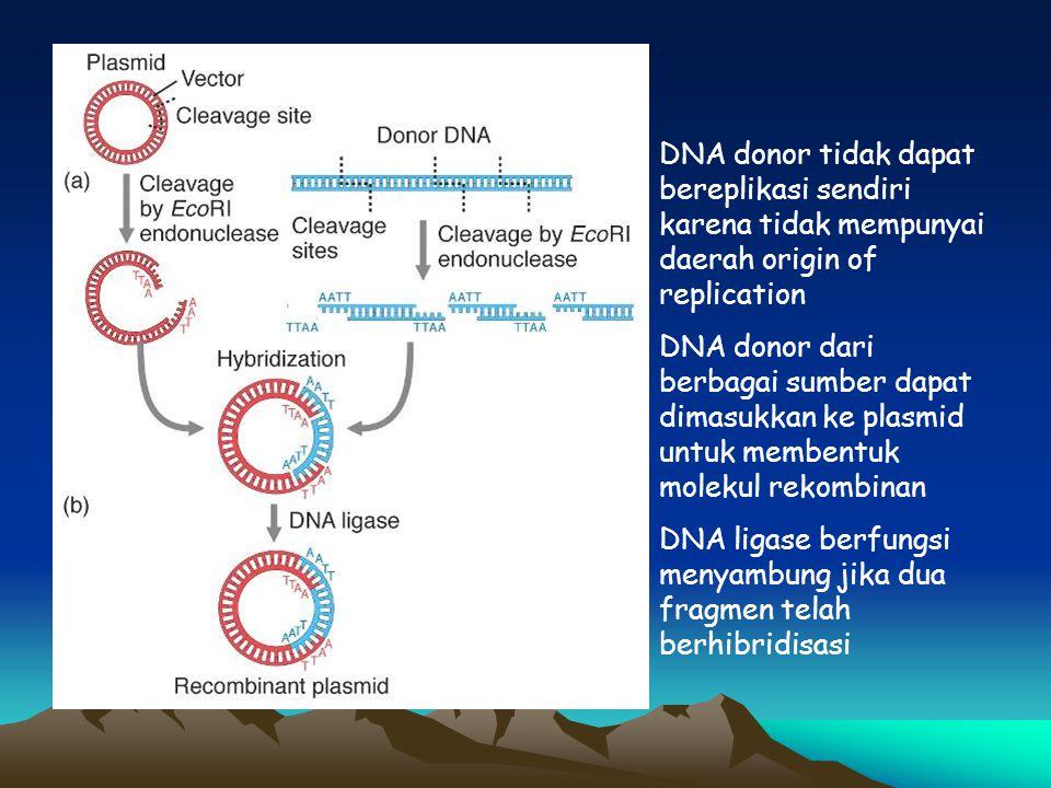 DNA donor tidak dapat bereplikasi sendiri karena tidak mempunyai daerah origin of replication DNA donor dari berbagai sumber dapat dimasukkan ke plasm
