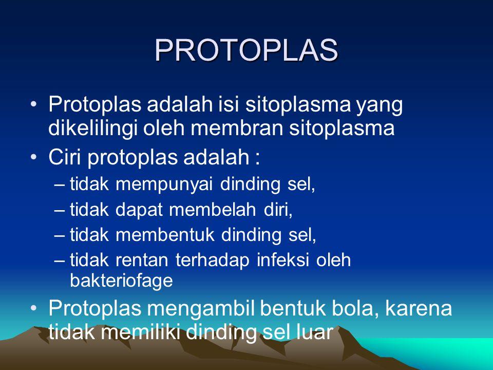 PROTOPLAS Protoplas adalah isi sitoplasma yang dikelilingi oleh membran sitoplasma Ciri protoplas adalah : –tidak mempunyai dinding sel, –tidak dapat