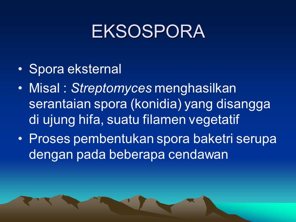 EKSOSPORA Spora eksternal Misal : Streptomyces menghasilkan serantaian spora (konidia) yang disangga di ujung hifa, suatu filamen vegetatif Proses pem