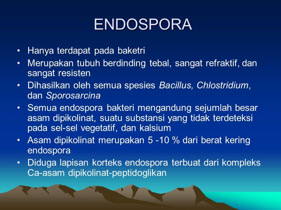 ENDOSPORA Hanya terdapat pada baketri Merupakan tubuh berdinding tebal, sangat refraktif, dan sangat resisten Dihasilkan oleh semua spesies Bacillus,