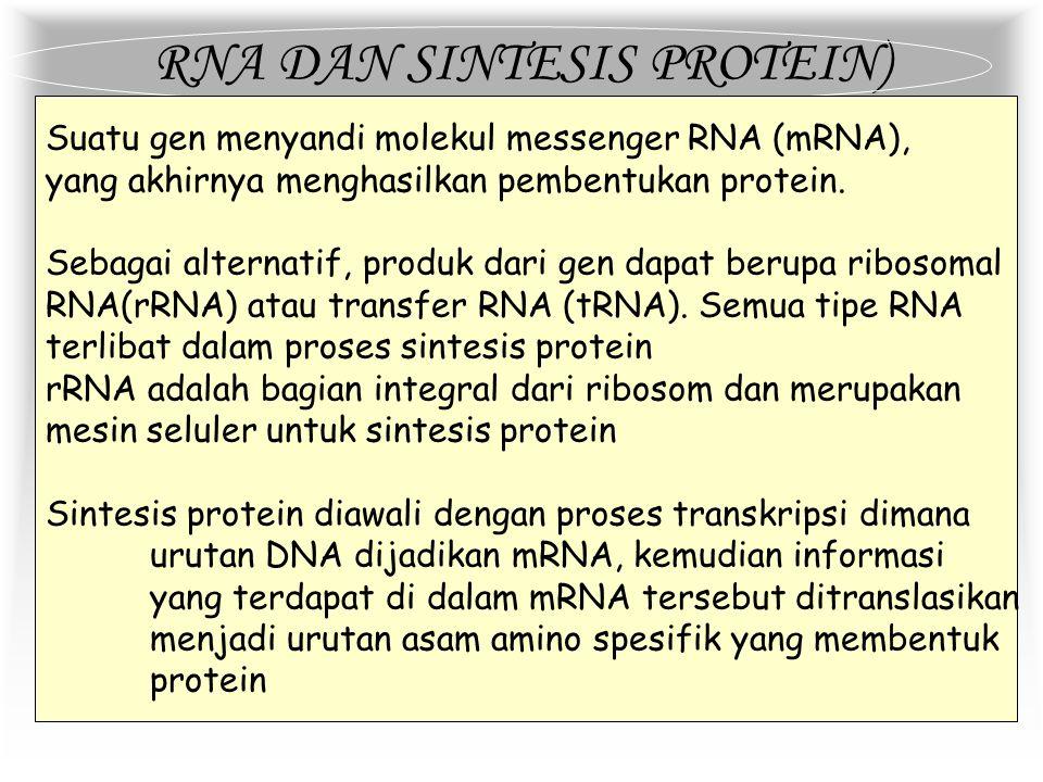 REPLIKASI DNA Pada waktu replikasi terjadi, dua pita induk DNA akan saling melepaskan diri dimulai dari satu titik replikasi yang disebut replication