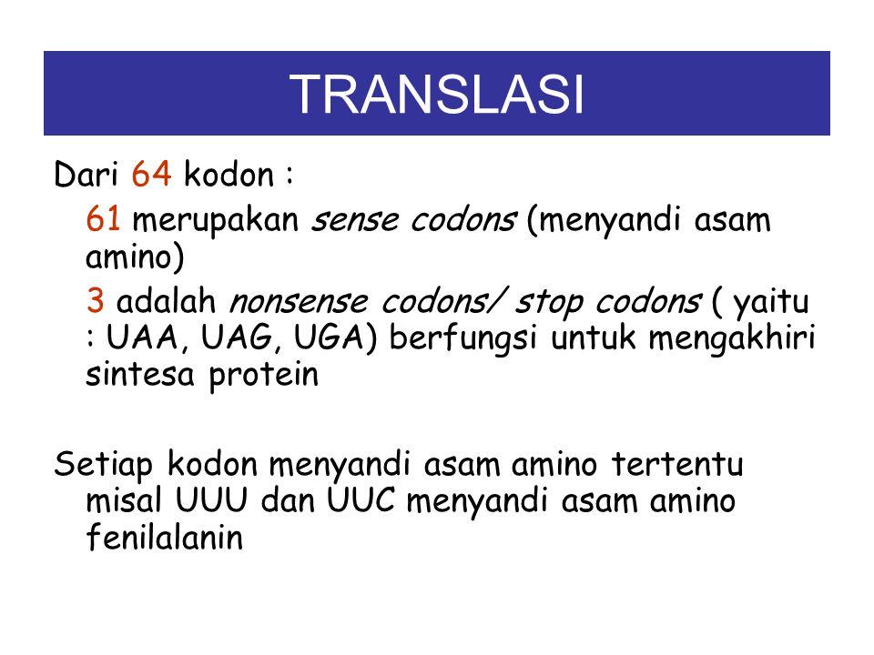 TRANSLASI Translasi adalah proses penerjemahan kode genetik pada mRNA menjadi rangkaian asam amino atau polipeptida. Kode genetik pada mRNA tertulis d