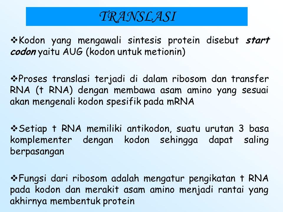 TRANSLASI Dari 64 kodon : 61 merupakan sense codons (menyandi asam amino) 3 adalah nonsense codons/ stop codons ( yaitu : UAA, UAG, UGA) berfungsi unt
