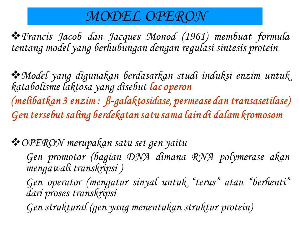 TRANSLASI  Kodon yang mengawali sintesis protein disebut start codon yaitu AUG (kodon untuk metionin)  Proses translasi terjadi di dalam ribosom dan