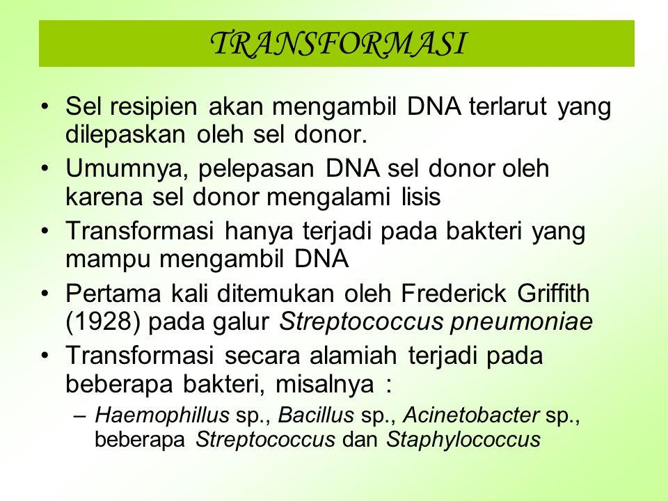 PEMINDAHAN MATERI GENETIK Pada persitiwa pemindahan materi genetik, ada sel yang bertindak sebagai sel donor dan sel lain sebagai resipien Mekanisme p