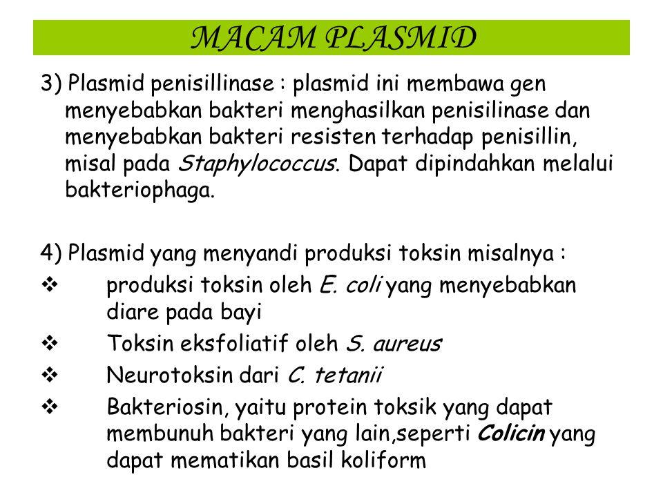 MACAM PLASMID 2) Faktor R atau faktor resistensi pada plasmid yang membawa gen yang dapat menyebabkan bakteri atau sel hospesnya resisten teradap satu