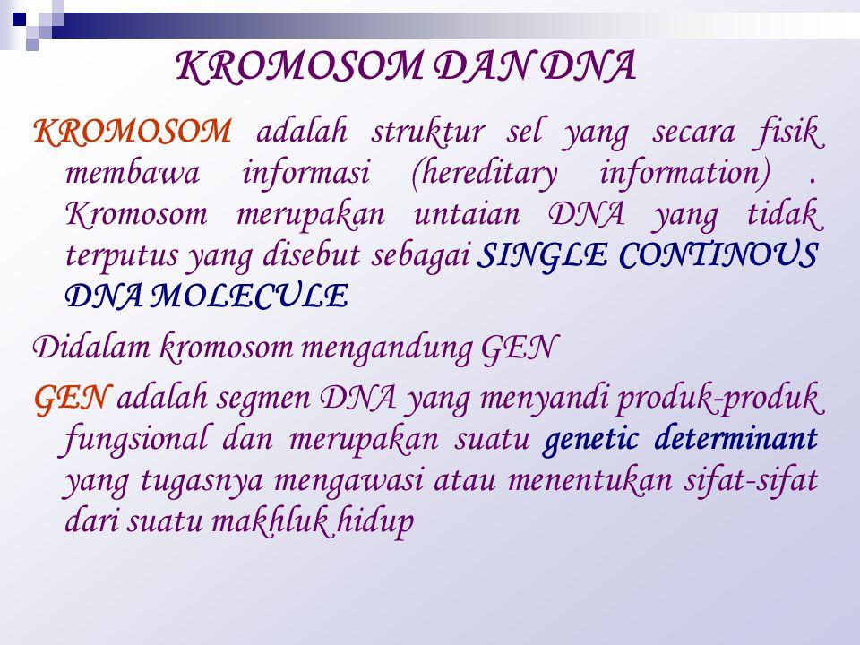 KROMOSOM DAN DNA KROMOSOM adalah struktur sel yang secara fisik membawa informasi (hereditary information).