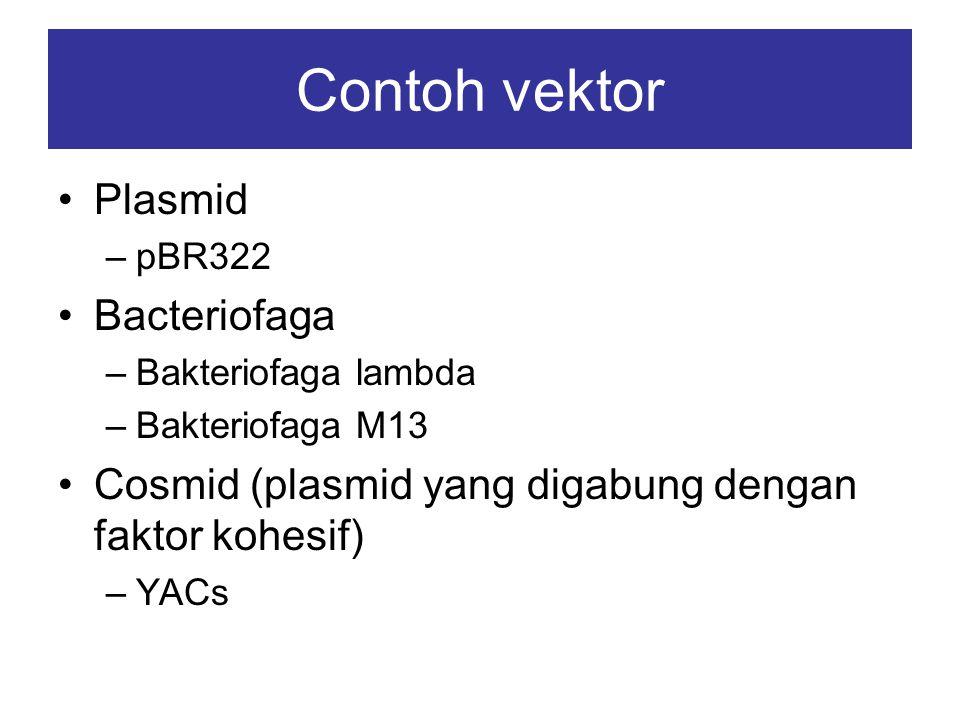Untuk mengetahui apakah suatu sel telah mengandung vektor, biasanya digunakan gen petanda (marker gene) dalam vektor Gen petanda yang sering digunakan