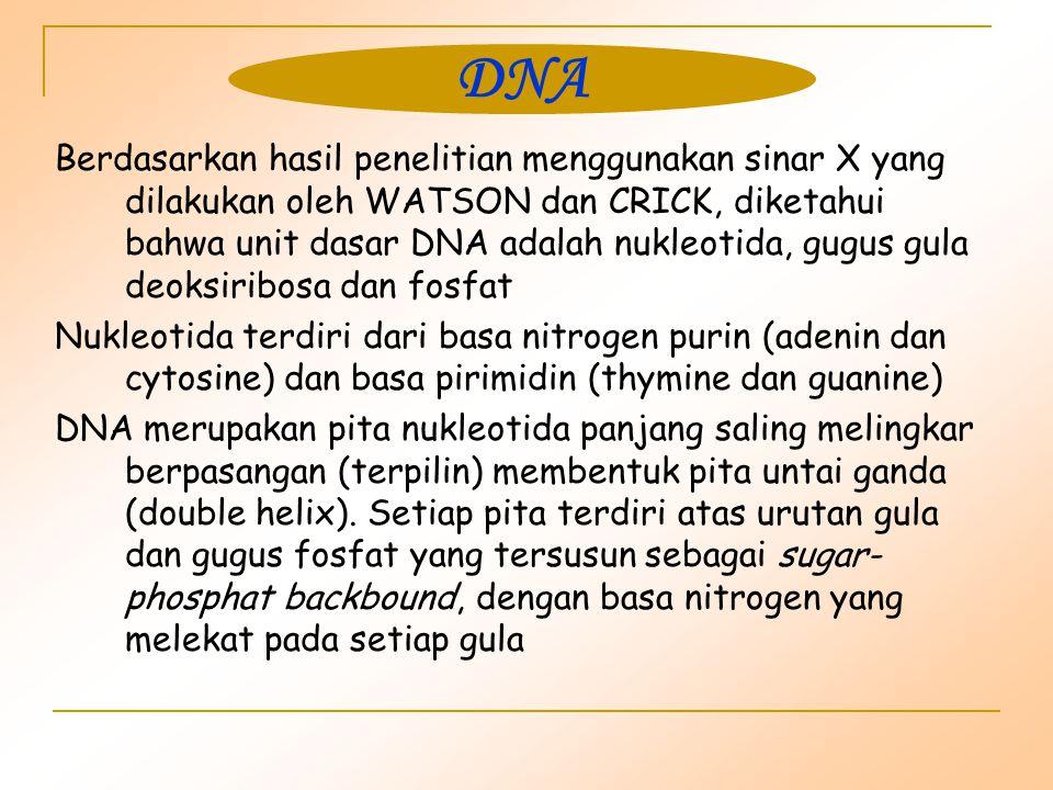 Berdasarkan hasil penelitian menggunakan sinar X yang dilakukan oleh WATSON dan CRICK, diketahui bahwa unit dasar DNA adalah nukleotida, gugus gula deoksiribosa dan fosfat Nukleotida terdiri dari basa nitrogen purin (adenin dan cytosine) dan basa pirimidin (thymine dan guanine) DNA merupakan pita nukleotida panjang saling melingkar berpasangan (terpilin) membentuk pita untai ganda (double helix).