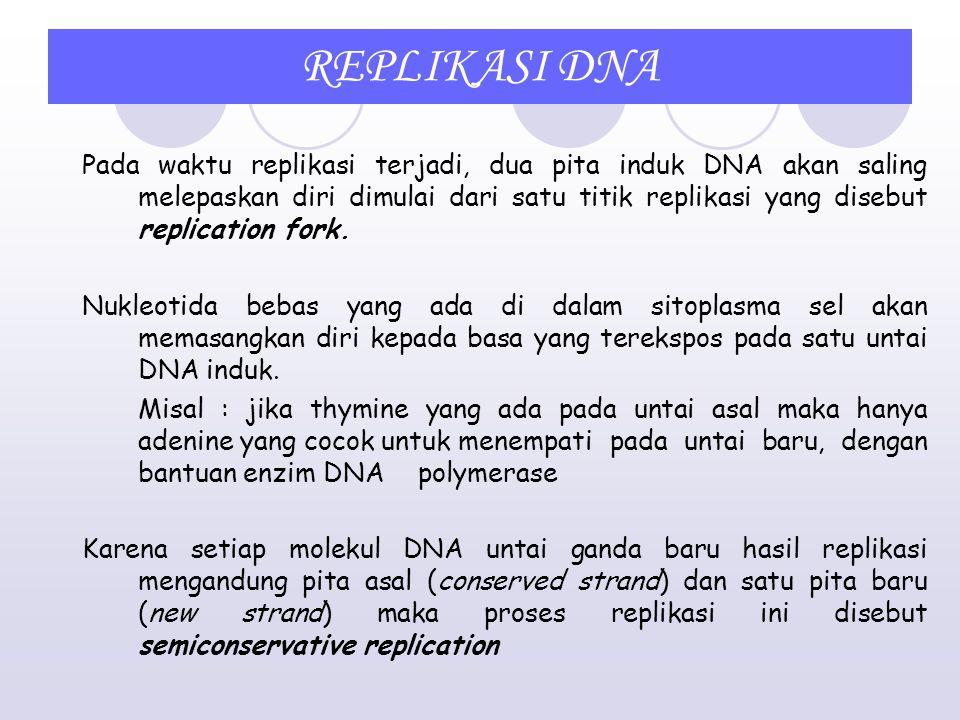 REPLIKASI DNA Menjelang terjadinya pembelahan sel, kromosom mengadakan duplikasi atau replikasi sehingga sel keturunannya akan mempunyai kromosom yang