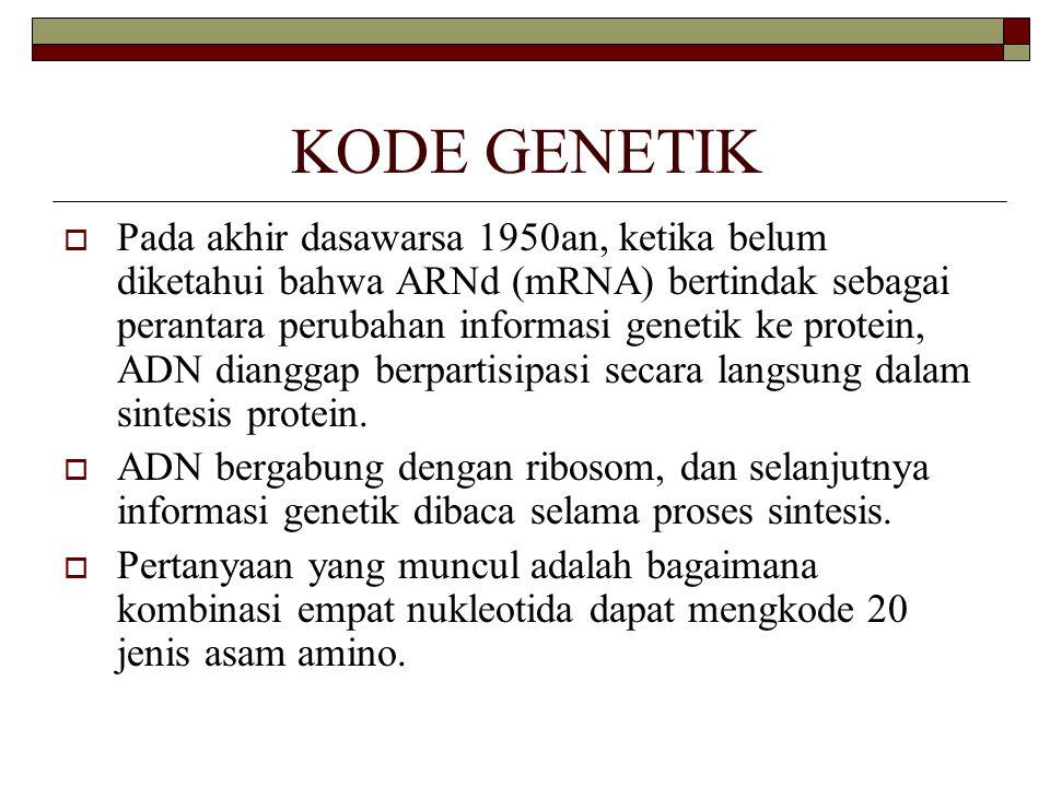 KODE GENETIK  Pada akhir dasawarsa 1950an, ketika belum diketahui bahwa ARNd (mRNA) bertindak sebagai perantara perubahan informasi genetik ke protei