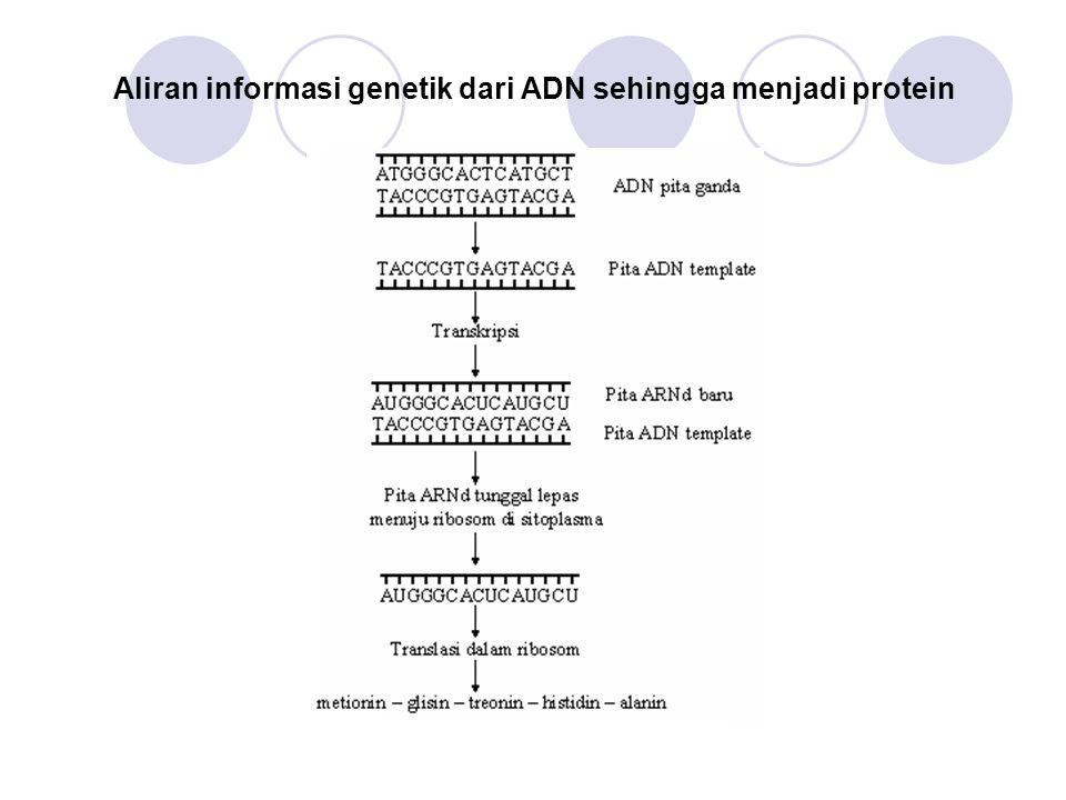Aliran informasi genetik dari ADN sehingga menjadi protein