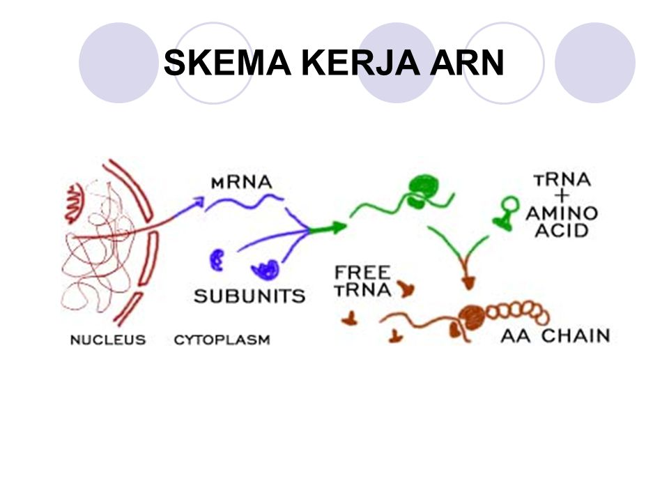 SKEMA KERJA ARN