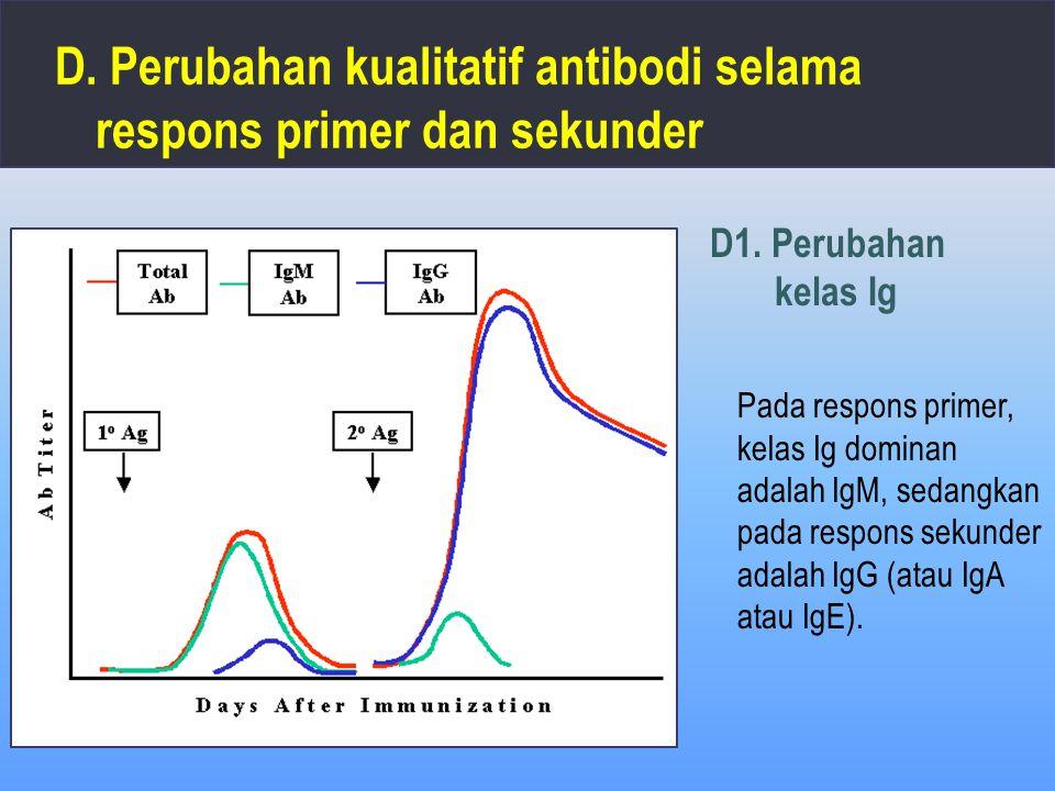 D. Perubahan kualitatif antibodi selama respons primer dan sekunder Pada respons primer, kelas Ig dominan adalah IgM, sedangkan pada respons sekunder