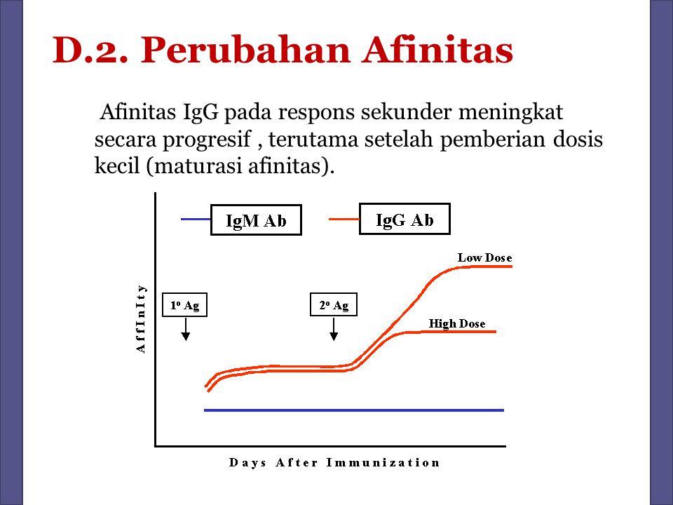 D.2. Perubahan Afinitas Afinitas IgG pada respons sekunder meningkat secara progresif, terutama setelah pemberian dosis kecil (maturasi afinitas).