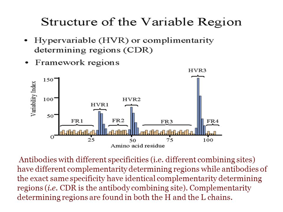 Antibodies with different specificities (i.e. different combining sites) have different complementarity determining regions while antibodies of the ex