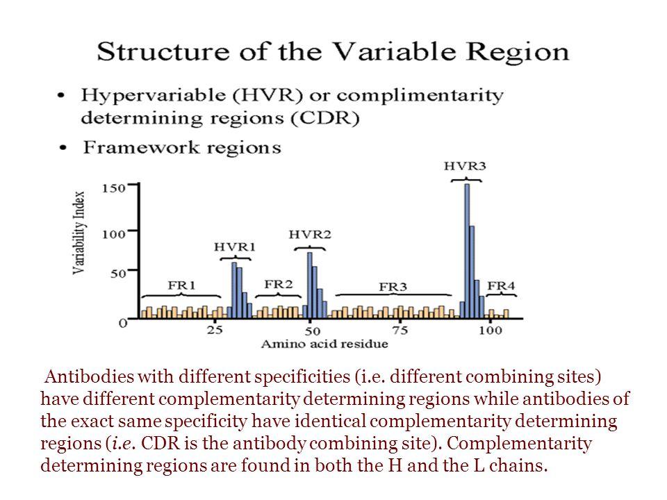 Saat terjadi respons terhadap antigen T-dependent, terjadi pertukaran kelas Ig antigen ( class switching ), dari IgM ke kelas lain (kecuali IgD) class switching disebabkan oleh penataan ulang DNA (DNA rearrangement) yang terjadi pada - Daerah switch site (S μ ) di intron antara VDJ regions dan gen C μ dengan - daerah switch site sebelum gen-gen pengatur daerah konstan rantai berat yang lain Karena gen VDJ yang sama tetap berada dekat dengan gen penyandi daerah konstan, dan karena spesifitas antibodi ditentukan oleh daerah hipervariabel  antibodi yang terbentuk setelah switching mempunyai spesifitas yang sama dengan antibodi sebelumnya.