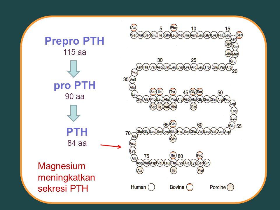 Prepro PTH 115 aa pro PTH 90 aa PTH 84 aa Magnesium meningkatkan sekresi PTH
