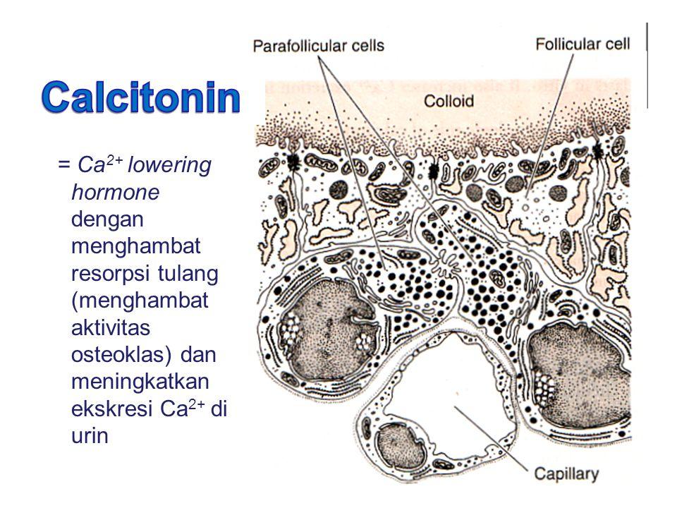 = Ca 2+ lowering hormone dengan menghambat resorpsi tulang (menghambat aktivitas osteoklas) dan meningkatkan ekskresi Ca 2+ di urin