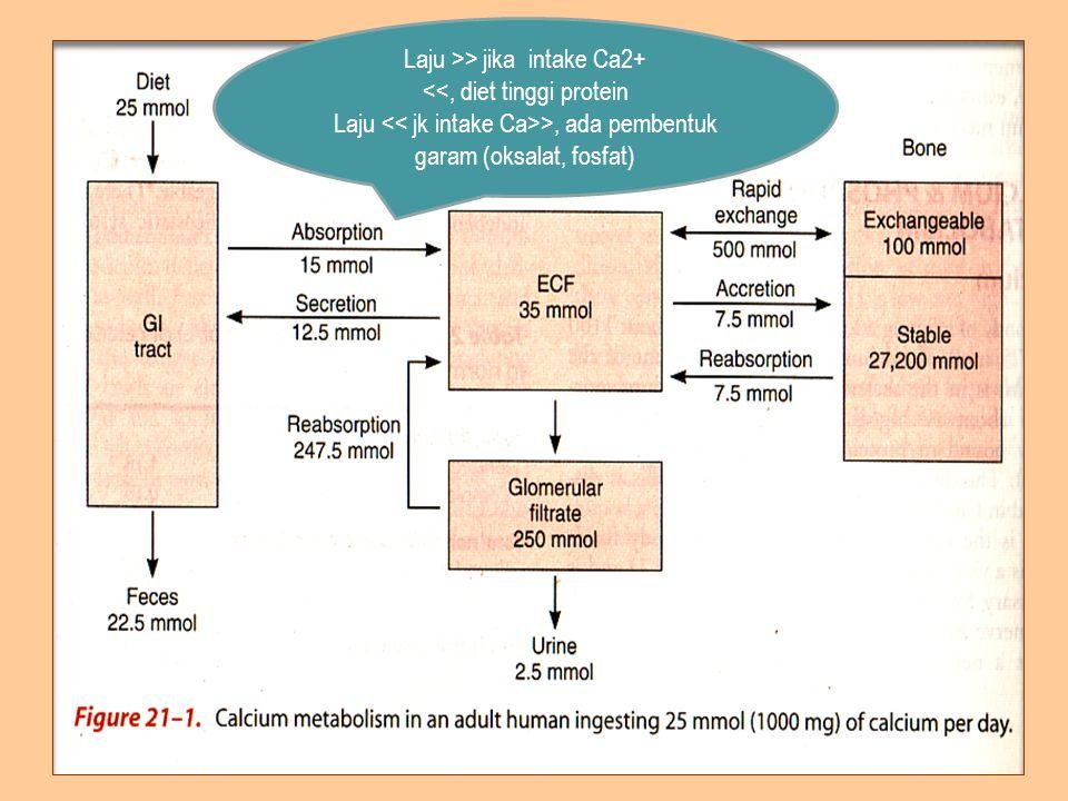 Laju >> jika intake Ca2+ <<, diet tinggi protein Laju >, ada pembentuk garam (oksalat, fosfat)